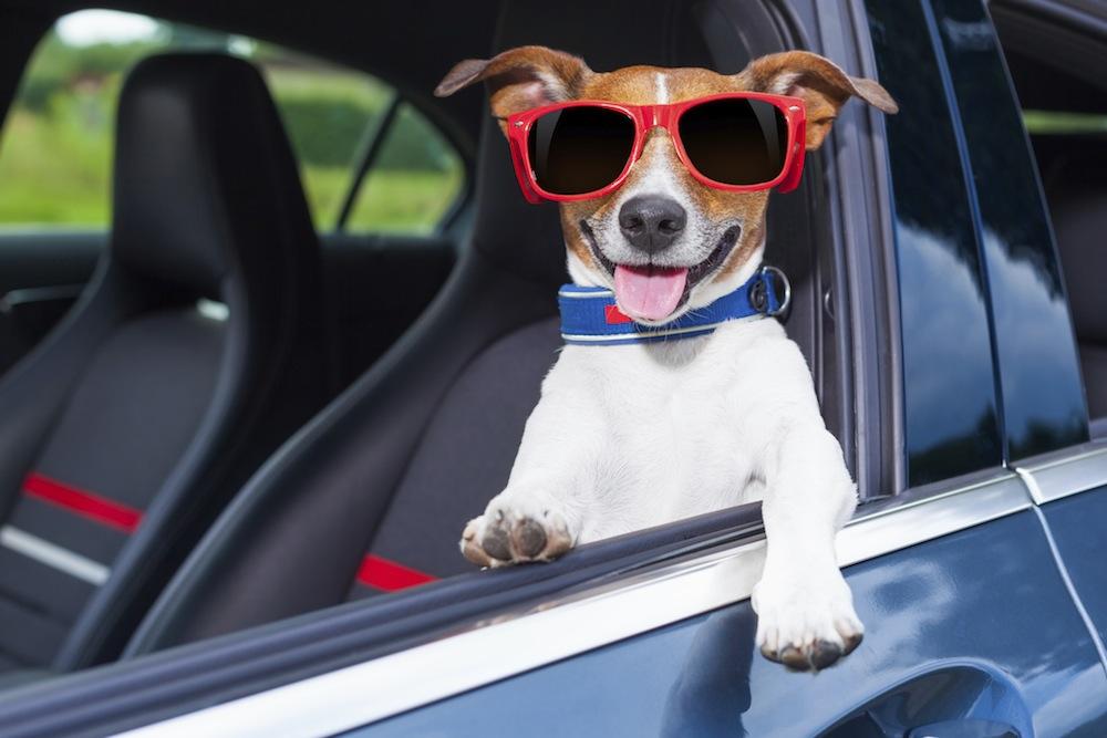 Seguridad para conducir con perros